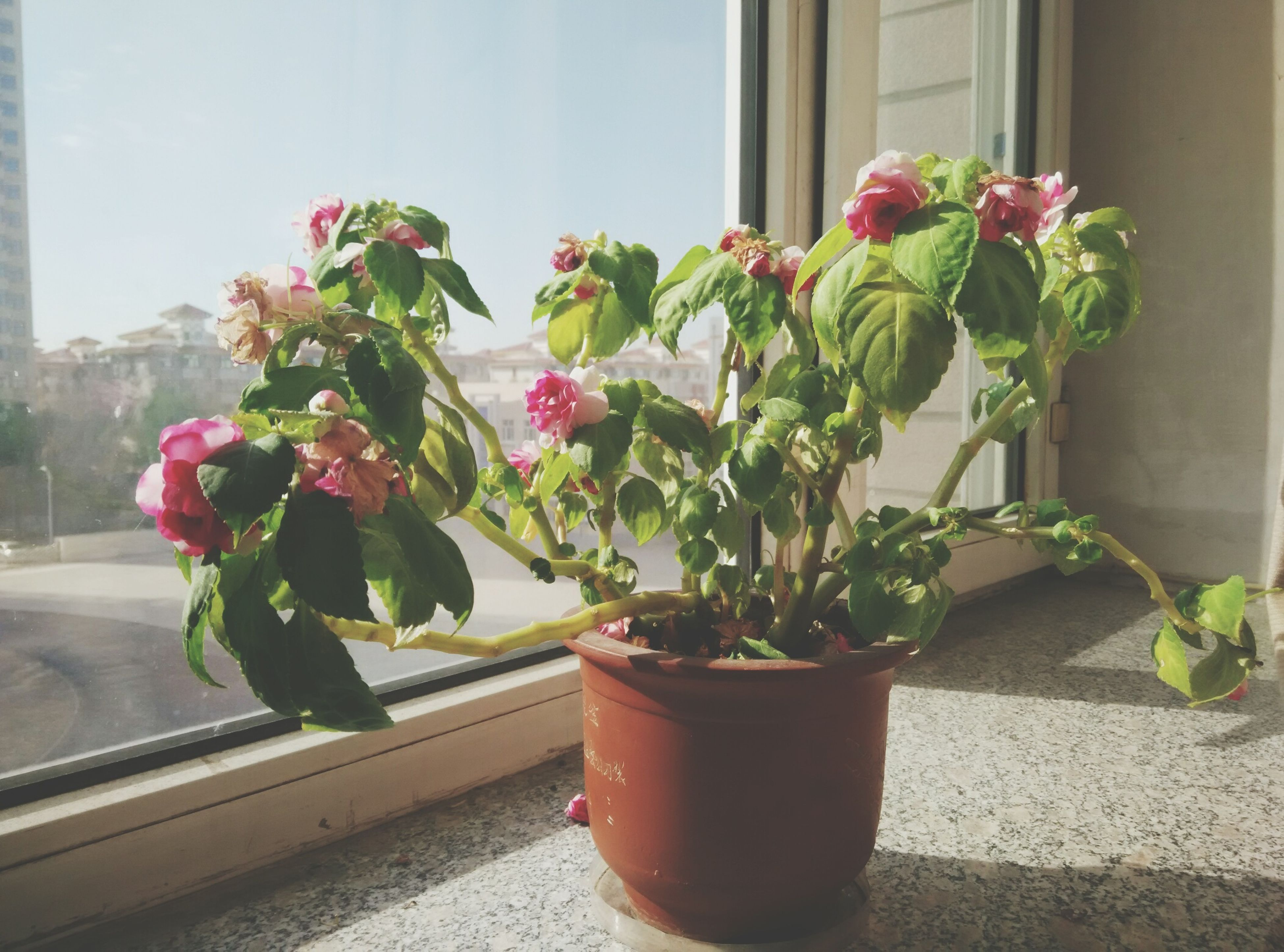 flower, potted plant, plant, freshness, growth, fragility, vase, window, leaf, indoors, petal, flower pot, window sill, nature, wall - building feature, flower head, beauty in nature, close-up, red, glass - material