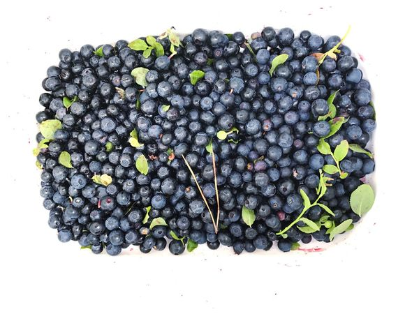 Healthy Eating Organic Fruit Black Color Grape Healthy Lifestyle Portable Information Device Vine - Plant Black Olive Close-up Mediterranean Food Social Issues Agriculture Food Nature Olive Directly Above No People Studio Shot Leaf