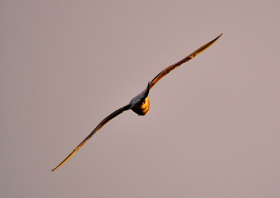 Animal Themes Animals In The Wild Bird Clear Sky Close-up Day England Inghilterra Mare Nature Nikon Nikond3300 No People One Animal Outdoors Photo Photographer Photography Photooftheday Scenic Sea Sea And Sky Sea Life Sea View Seaside