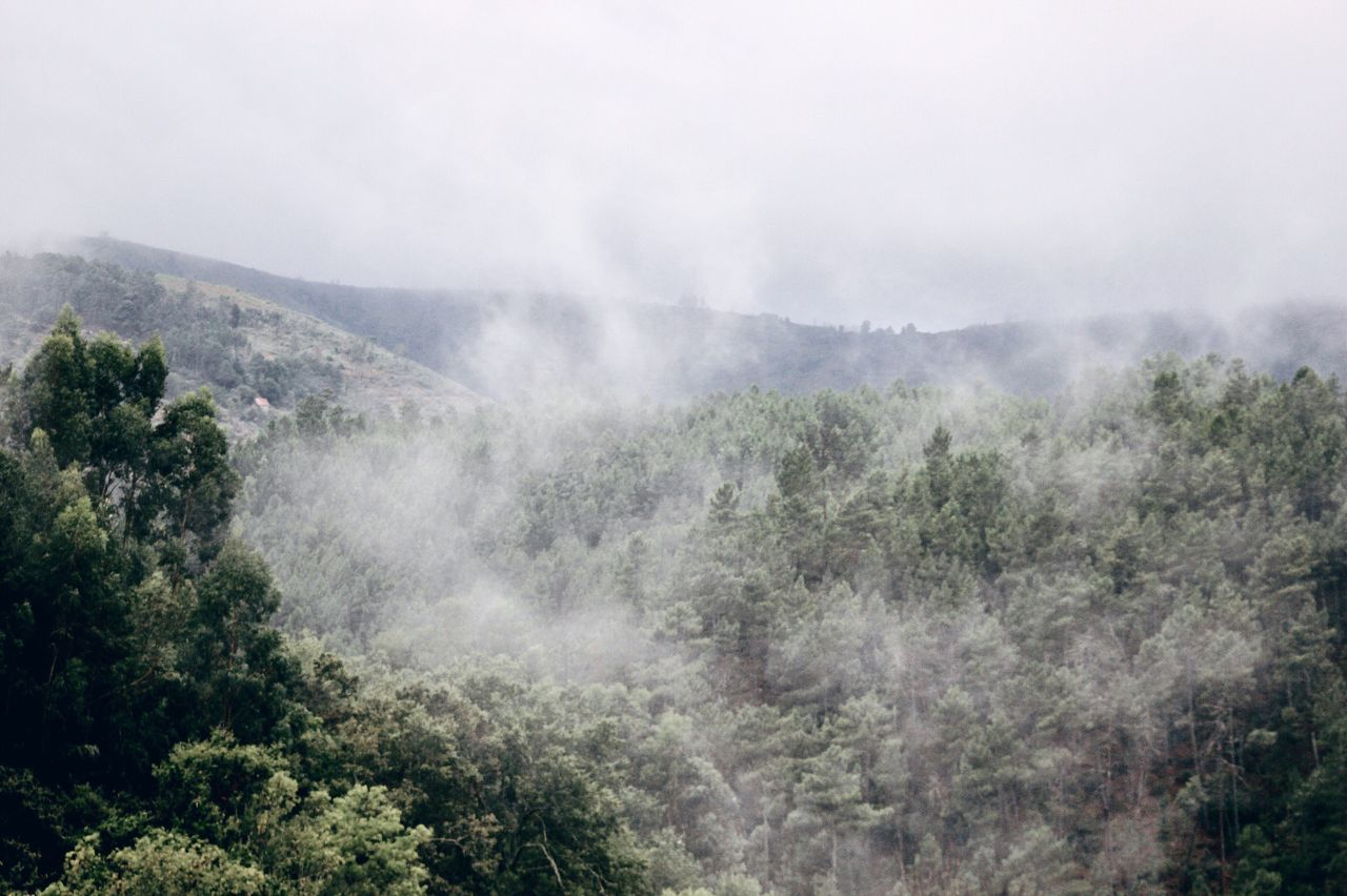 A crisp morning in the mountains. Nature Scenics Tranquil Scene Mountain Fog Idyllic Landscape Outdoors Foggy Morning Forest Photography Forest VSCO Vscocam Atmosphere Roadtrip Friends Freedom Picoftheday Exploring Earth Hello World Capture The Moment The Week On EyeEem Creative Light And Shadow