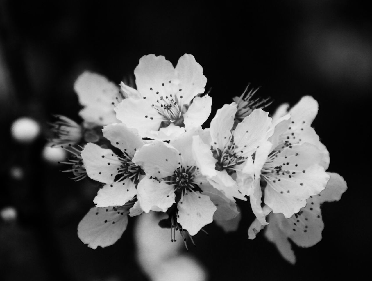 flower, fragility, beauty in nature, blossom, petal, growth, nature, freshness, flower head, botany, pollen, springtime, apple blossom, close-up, stamen, white color, no people, day, outdoors, tree, branch