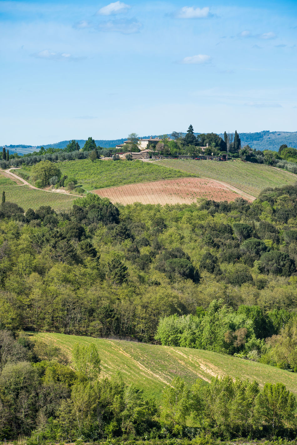 Agriculture Beauty In Nature Cloud - Sky Crop  Day Farm Field Green Color Growth Landscape Nature No People Outdoors Rural Rural Scene Scenics Siena Sky Tranquil Scene Tree Tuscany Val D'orcia Wine Winemaking Winery