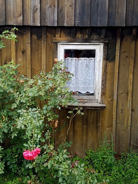 Window No People Architecture Built Structure Building Exterior Nature Plant Grass Wooden Wall Wooden House Outside Wooden Window Frame Curtain Old Fashioned Building Old Fashioned Beauty Old Fashioned Scene Old Fashioned House Rose Bush Rosé Pink Rose Verwittert Beliebte Fotos EyeEm Selects Still Life Country Garden Windows Around The World