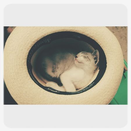 Anjos indefesos pedem socorro. Castre, adote, cuide. Hello World Cat♡ Pet Photography  Kitty!