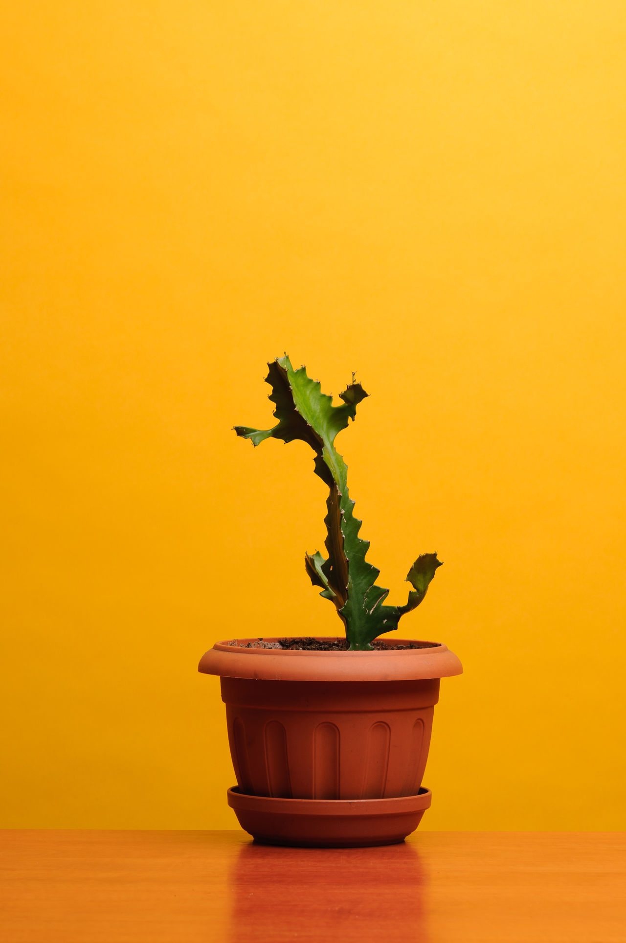 Cactus Close-up Flower Pot Growth Indoors  No People Orange Color Potted Plant Sea Selective Focus Table Vibrant Color Yellow First Eyeem Photo
