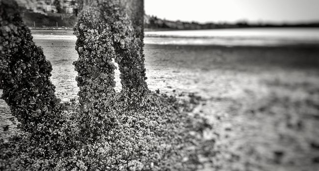 Tree Trunk Focus On Foreground Close-up Nature Fragility No People Surface Level Tranquility Tranquil Scene Coastline Cloud - Sky Built Structure Architecture Scenics Water Clear Sky Seascape Idyllic Pier Majestic Tranquility Beauty In Nature Sea Growing Outdoors