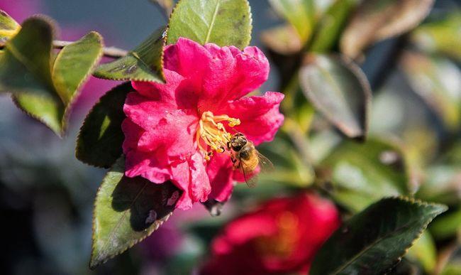 Bee Sunshine Flowers Flowers,Plants & Garden Enjoying Life EyeEm Gallery EyeEmBestPics Colors Taking Photos Photography EyeEm Best Shots
