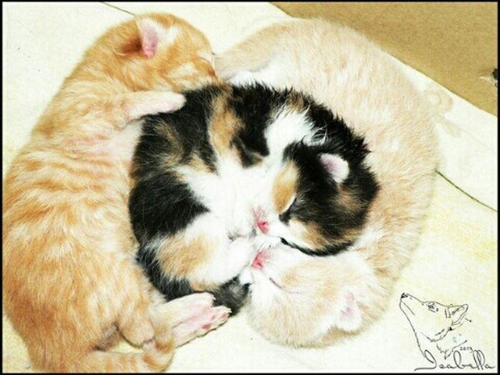 котята Cats Аллегра августин Ричард рождение котята сон