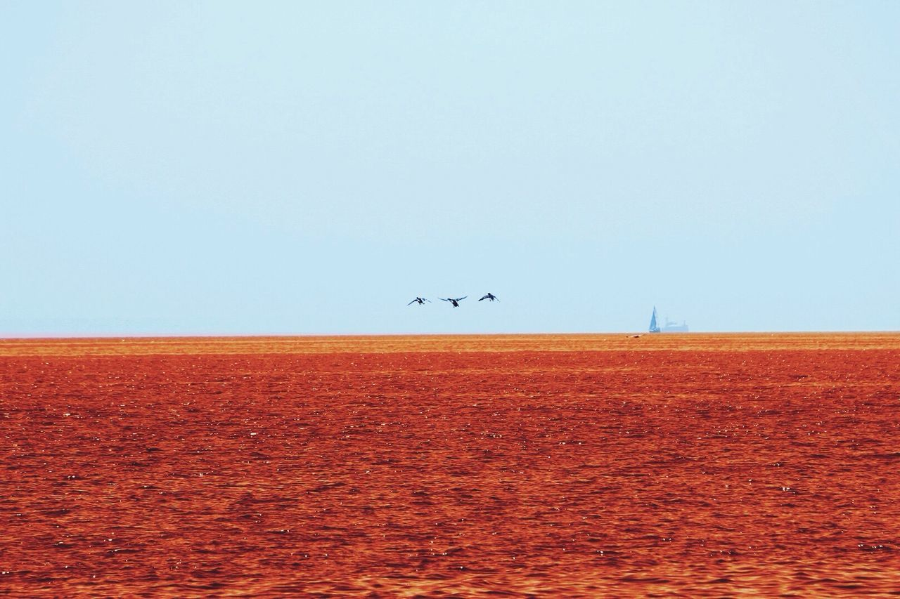 Colors And Patterns Reedited Clear Sky Copy Space Bird Horizon Over Land Flying Blue Tranquil Scene Tranquility Scenics Beauty In Nature Nature Orange Color Rural Scene No People Outdoors Lakemichigan