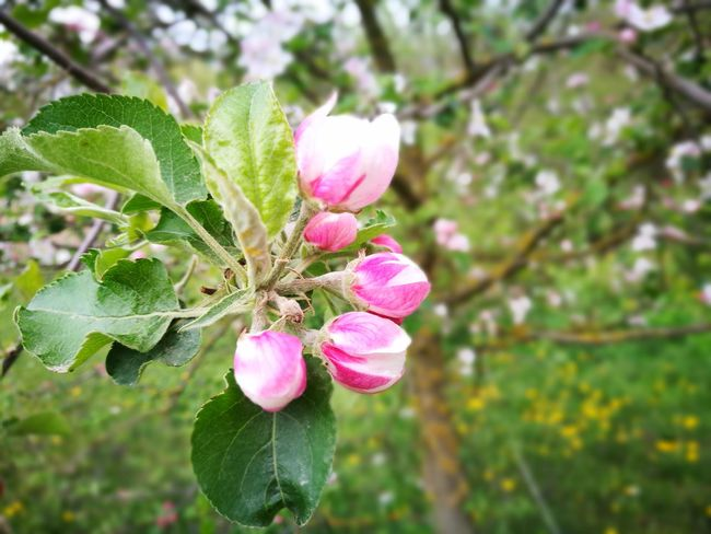Nature Pink Color Flower Plant Focus On Foreground Beauty In Nature Day Freshness Green Color Growth No People Close-up Outdoors Leaf Fragility Flower Head
