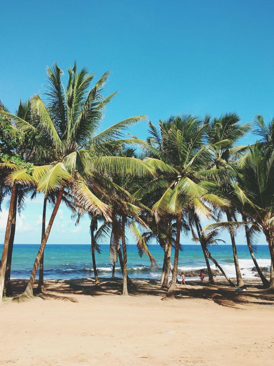 Praia de Itapoã, Salvador - BA, Brasil Brasil Salvador Bahia Praia Beach Photography Beach BlueLandscapes With WhiteWall