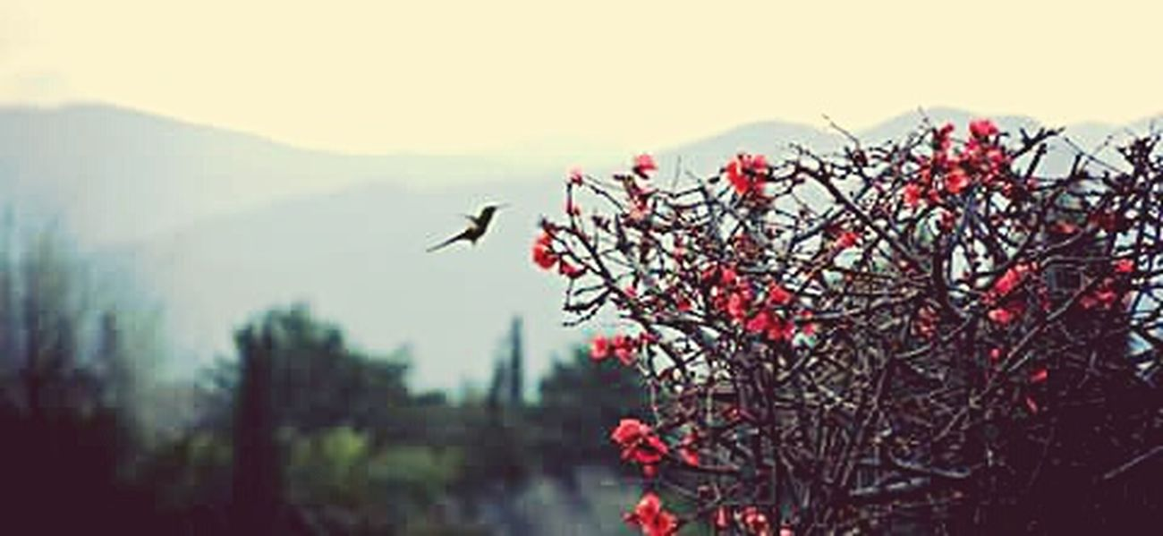 Red No People Outdoors Nature Day Sky Bird Beauty In Nature Bird Photography Birds Hummingbird Flower Flowers Photography Photooftheday Photographic Memory Photographer Pretty Plant Nature Building Exterior Multi Colored Dramatic Sky