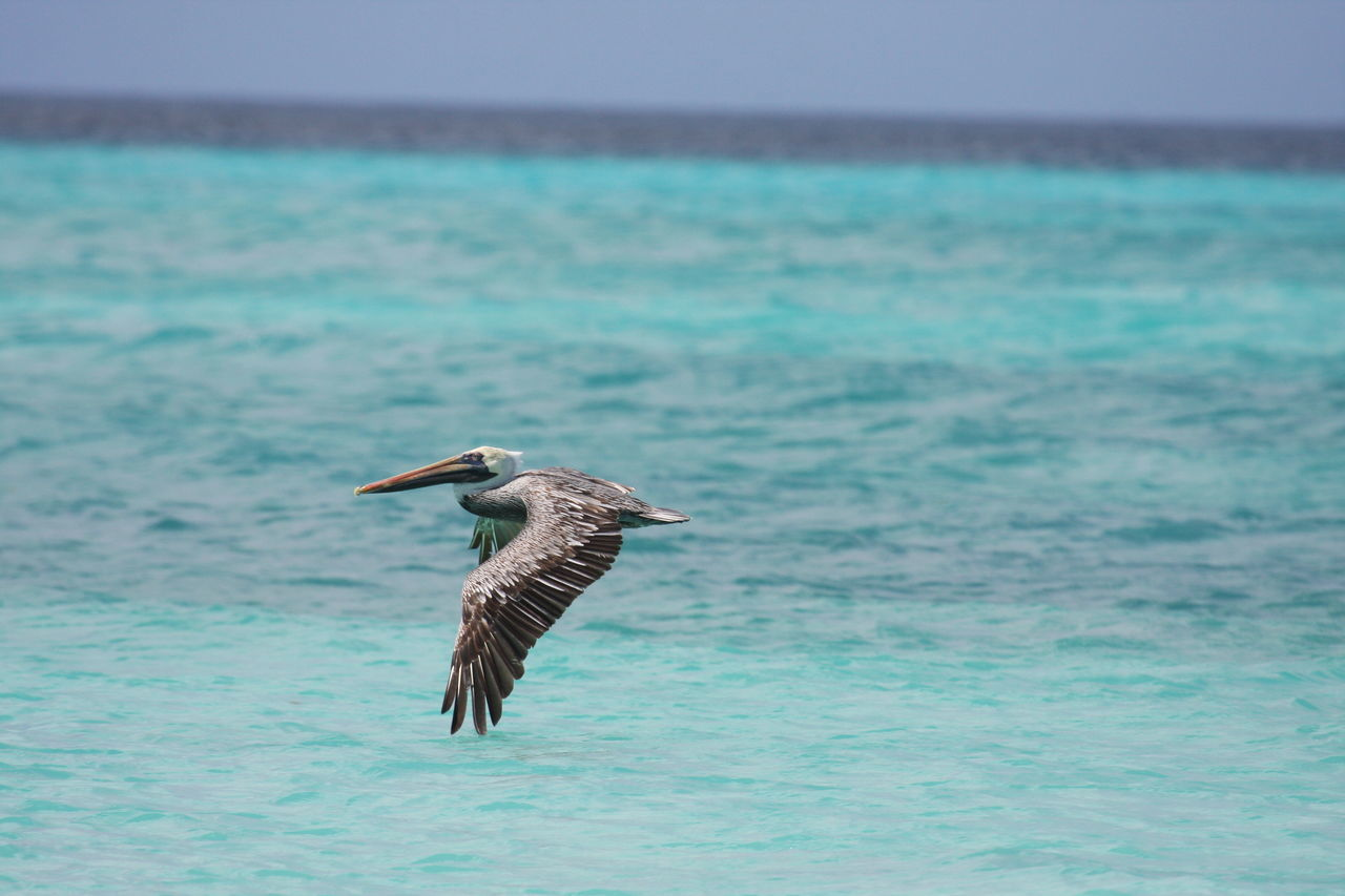 Animal Themes Animal Wildlife Animals In The Wild Beak Beauty In Nature Bird Day Flying Flying Pelican Nature No People One Animal Pelican Sea Sky Spread Wings Water