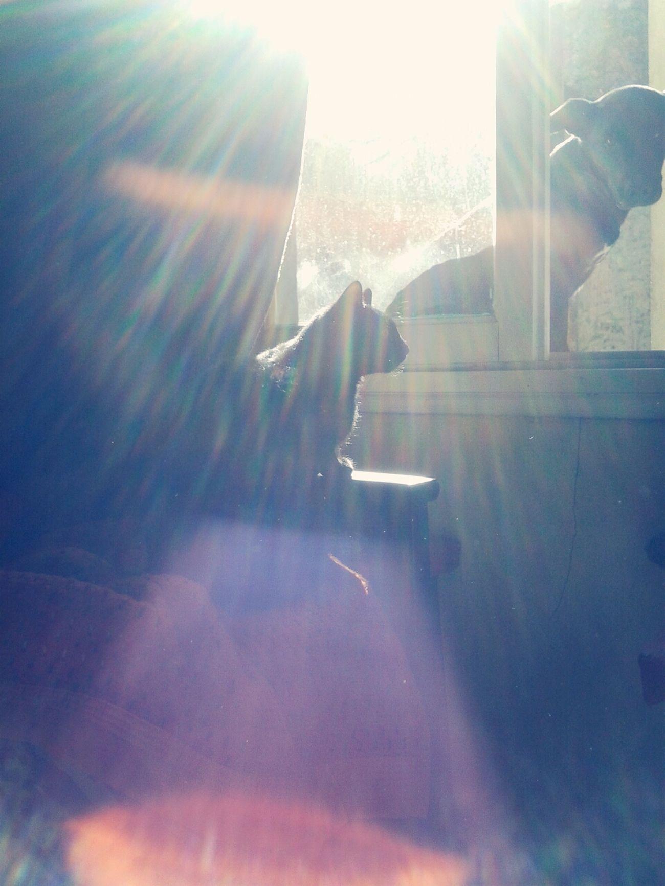 My Pets :) Catanddog Love♡ Petslovers