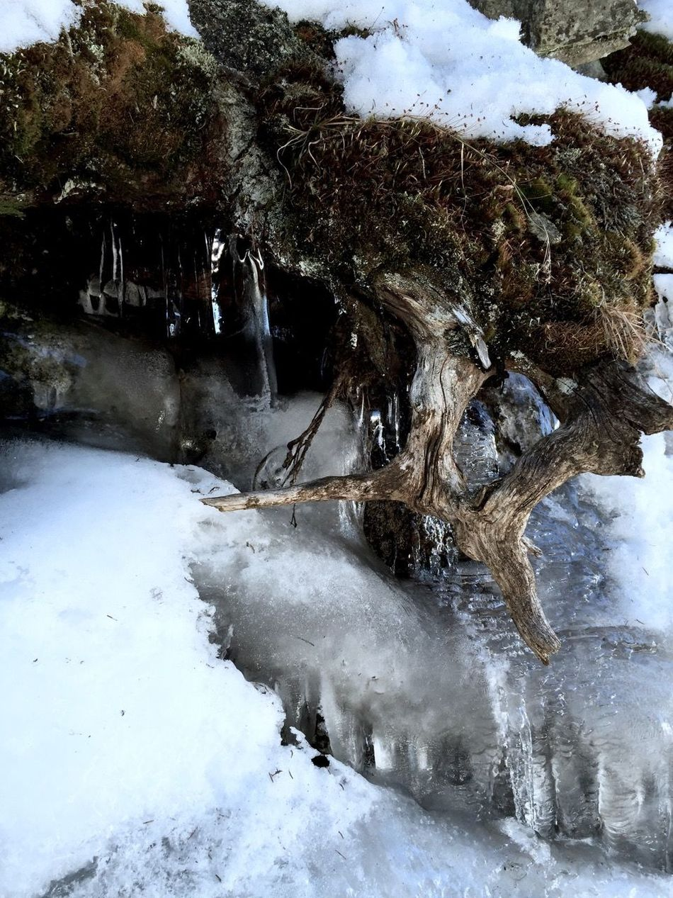 Beauty In Nature Cold Cold Temperature Covering Flowing Water Frozen No People Outdoors Season  Snow Tranquil Scene Tree Tree Trunk White White Color Winter Wurzeln