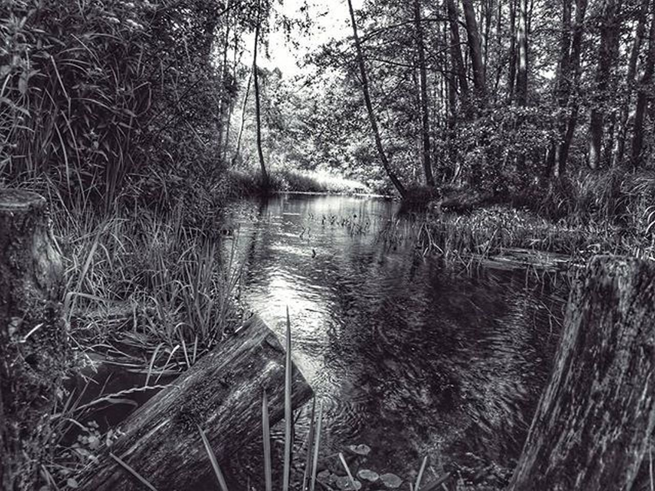 Match_bw Best_bnw_archive Srs_nature Srs_bnw Ig_captures Likeforlike Like4like Best_watershots Rsa_nature Rsa_bnw Super_polska Awphoto Bnw Blackandwhite Greatshot Nature Naturelovers Bayern