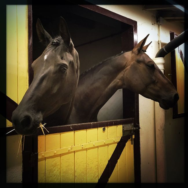 Animal Horse Life Horses I Love Horses The Color Of Sport