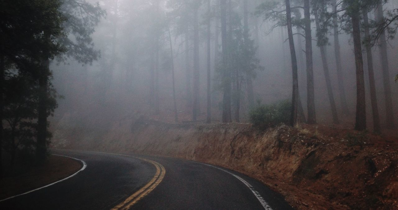 Empty Curved Road Amidst Trees During Foggy Weather