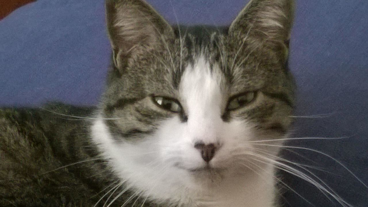 Guilty Cat Pervert Cat Smiling Cat