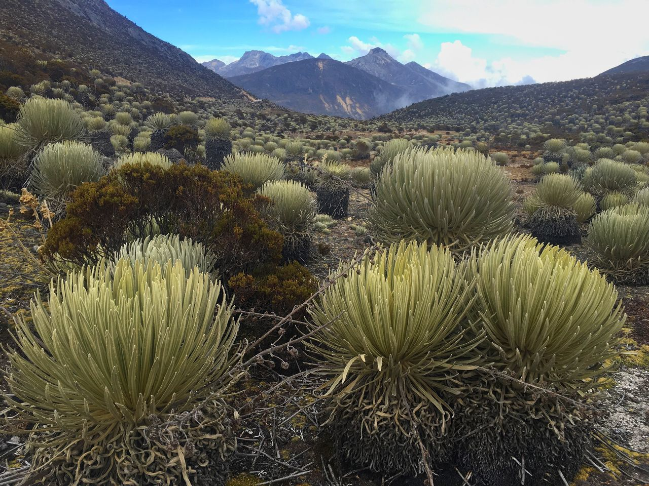 growth, nature, mountain, cactus, tranquility, plant, beauty in nature, no people, field, scenics, day, mountain range, outdoors, sky, saguaro cactus, close-up