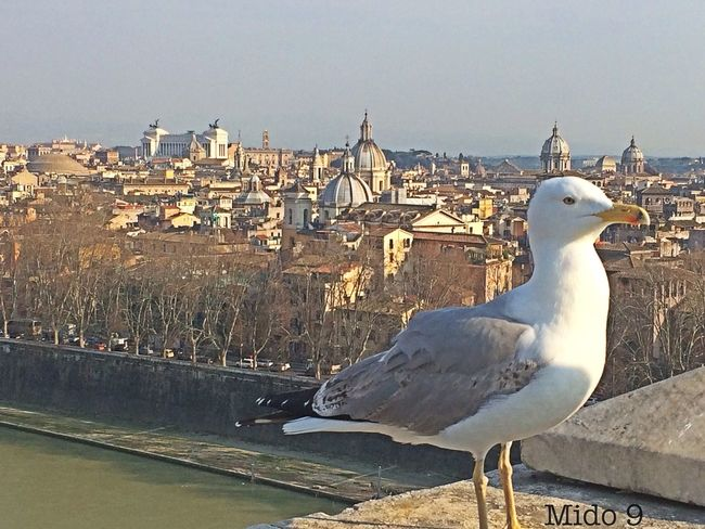 Check This Out Vetta più alta castel sant'angelo Roma Hello World Taking Photos