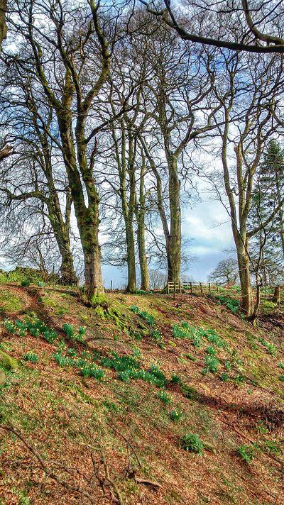 Walking Around Hugging A Tree Scotland Countryside