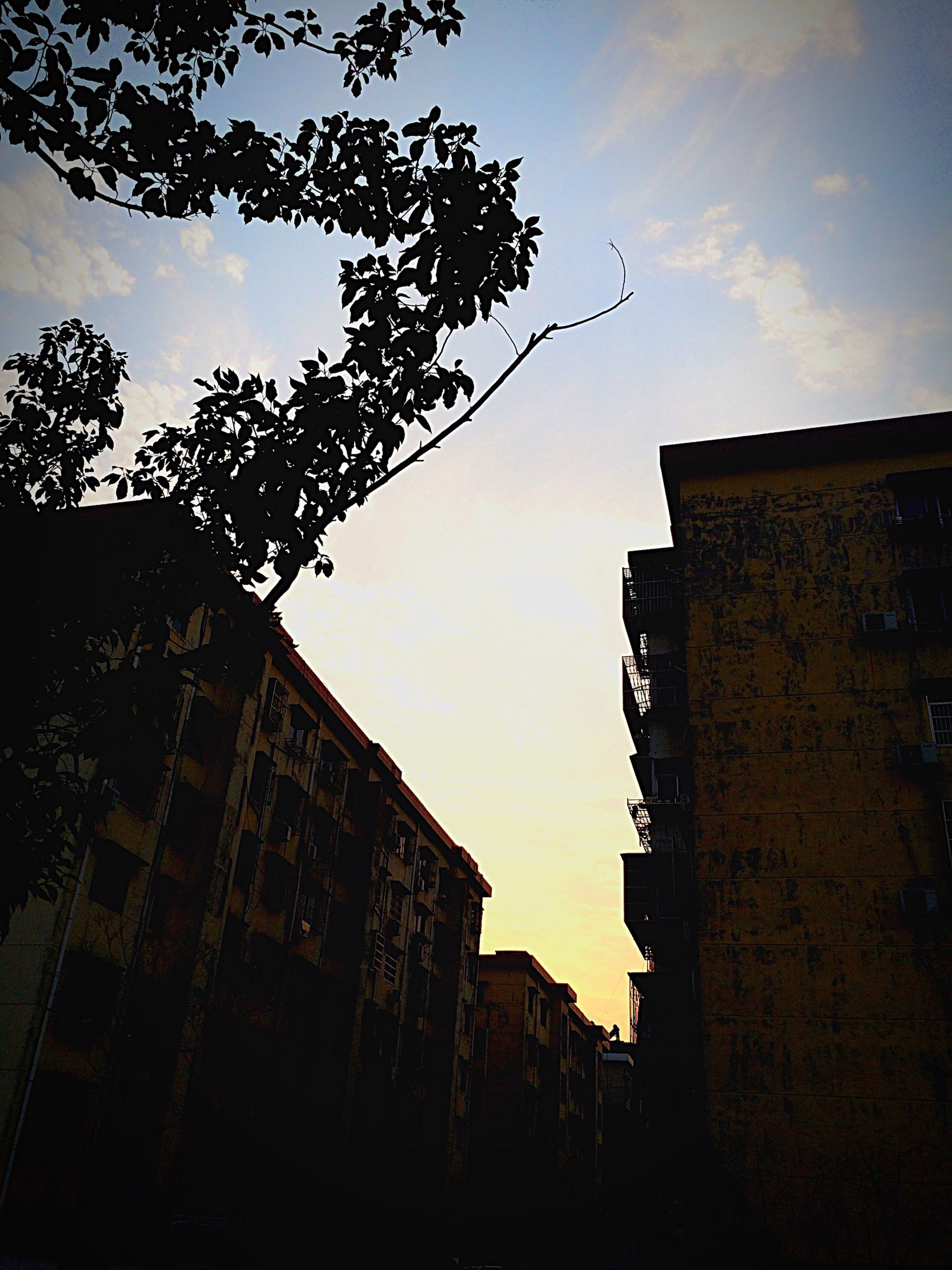 architecture, built structure, low angle view, building exterior, sky, silhouette, tree, sunset, building, branch, cloud - sky, house, dusk, residential building, outdoors, no people, residential structure, cloud, bare tree, nature