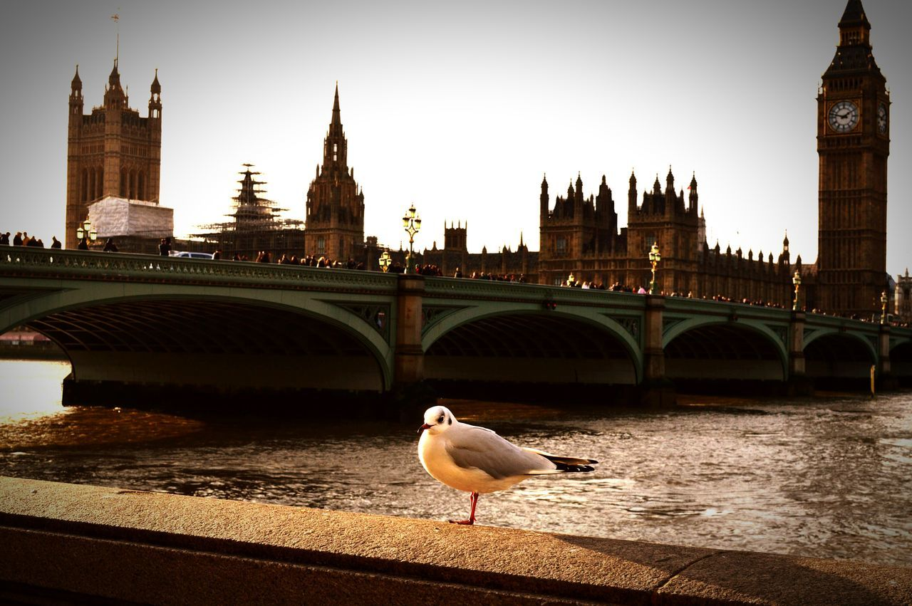London Lifestyle Parliament Parliament Building Big Ben Bigben Thames Thames River Thamesriver Bird Bird Photography Seagull Seagulls In The City