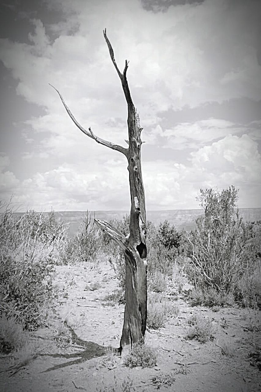 bare tree, sky, tranquility, nature, landscape, day, tranquil scene, dead plant, outdoors, arid climate, cloud - sky, scenics, beauty in nature, tree, dead tree, no people, tree trunk, dried plant, branch
