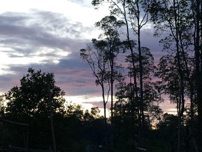 Sunset Pomako Timika Papua INDONESIA