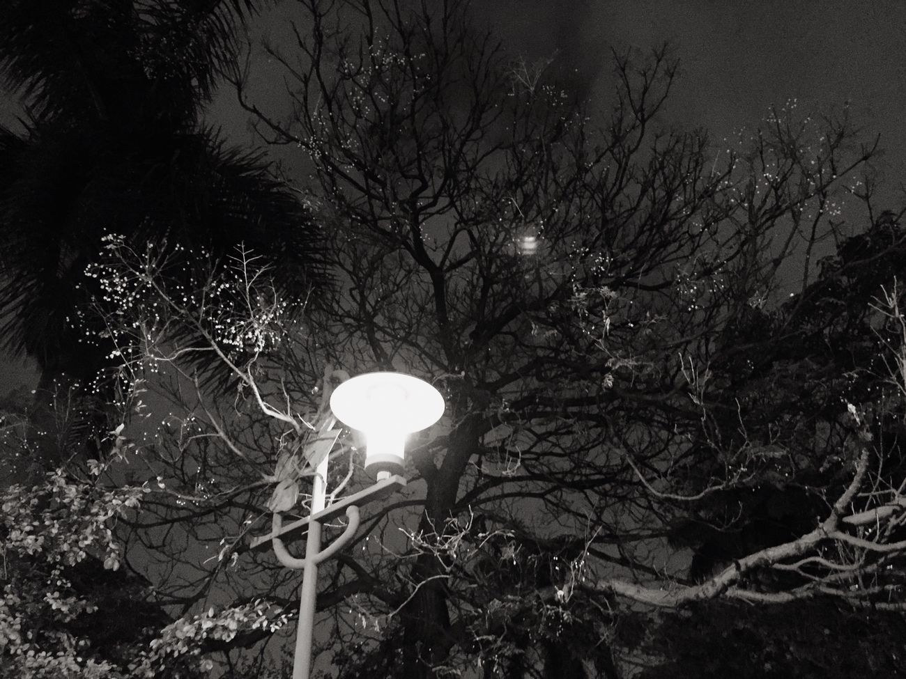 Night Lights Enjoying Life Trtraving Relaxing
