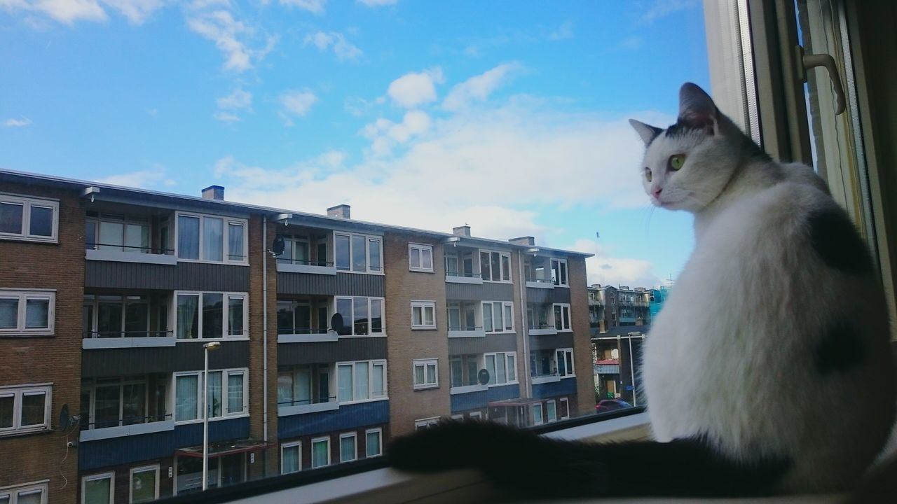 Window View Sitting Observing The World Window Sky And Clouds my catserie Appartments Watchingpeople and Traffic Cat Cat Lovers Catsagram Catphotography Animal Photography Light And Shadow Animal Themes Animallovers Inside Things The City Light