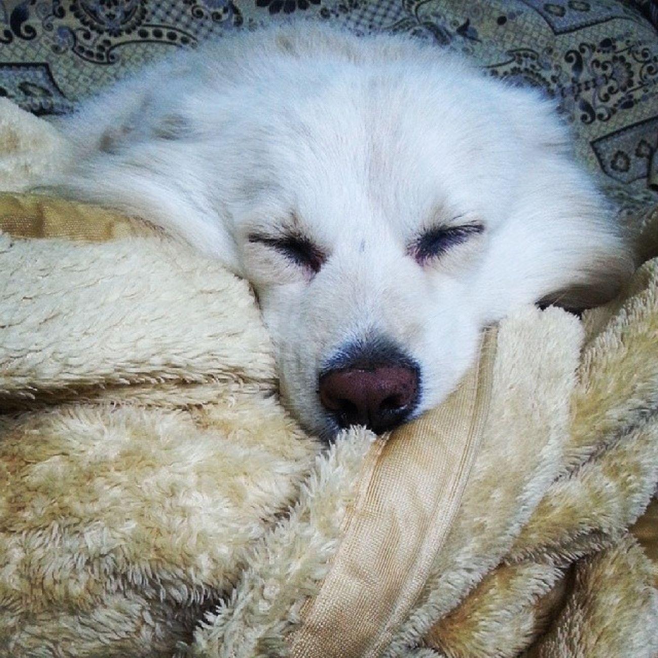 You cute little thing! ^_^ Dogloversofinstagram @dogloversofinstagram Weeklyfluff