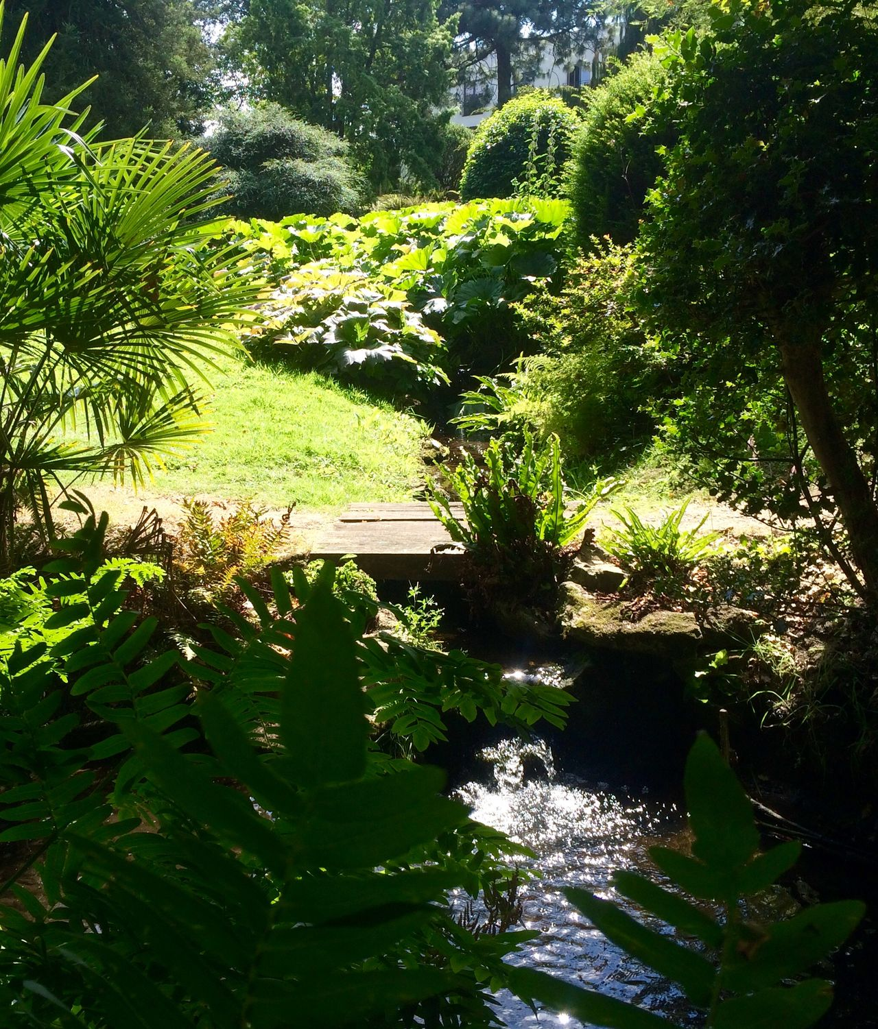Running water Day Ferns Garden Nature No People Outdoors Plant Running Water Summer ☀ Summertime Tree Water