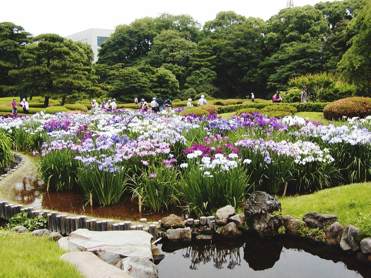 Landscapes With WhiteWall Planzen Lilien Park