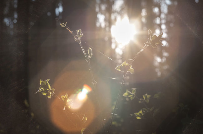 A walk in the forest. Forest Forest Photography Plants And Flowers Sunlight Bright Sun Lens Flare Sunbeam Shining Plant Sunny Brightly Lit Outdoors Nature Landscape Landscape_photography Belarus Minsk Landscspe New Talent This Week Beauty In Nature Nature No People Sunny Sunlight