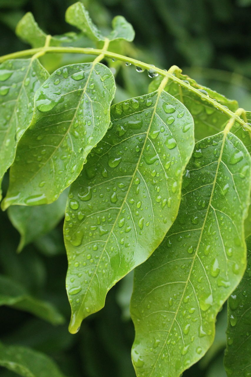 leaf, green color, drop, close-up, growth, freshness, focus on foreground, food and drink, no people, day, wet, plant, nature, water, fragility, outdoors, beauty in nature