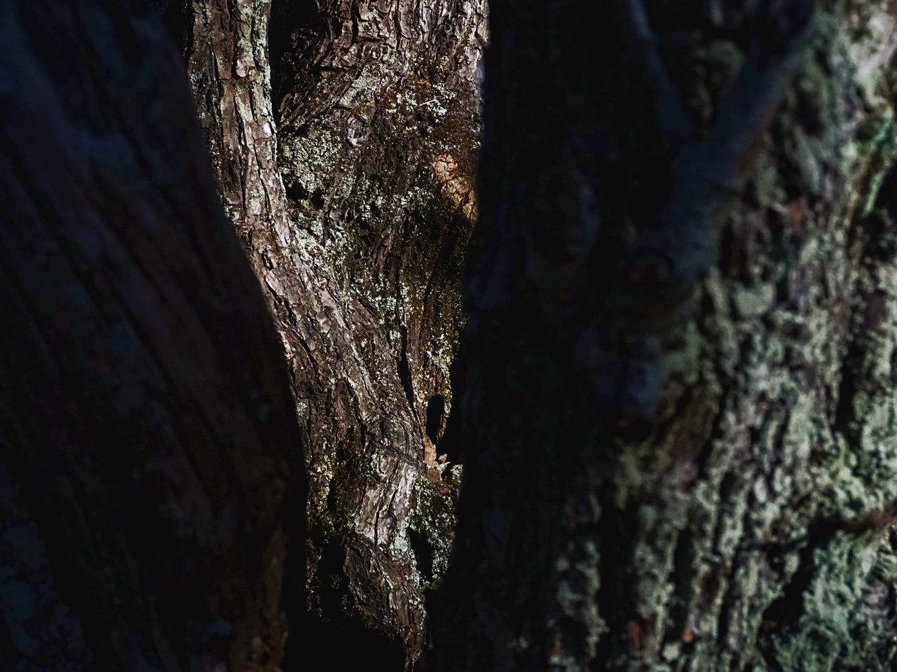tree trunk, tree, bark, textured, nature, growth, day, no people, rough, outdoors, beauty in nature, close-up, forest, moss, lichen, branch, fungus
