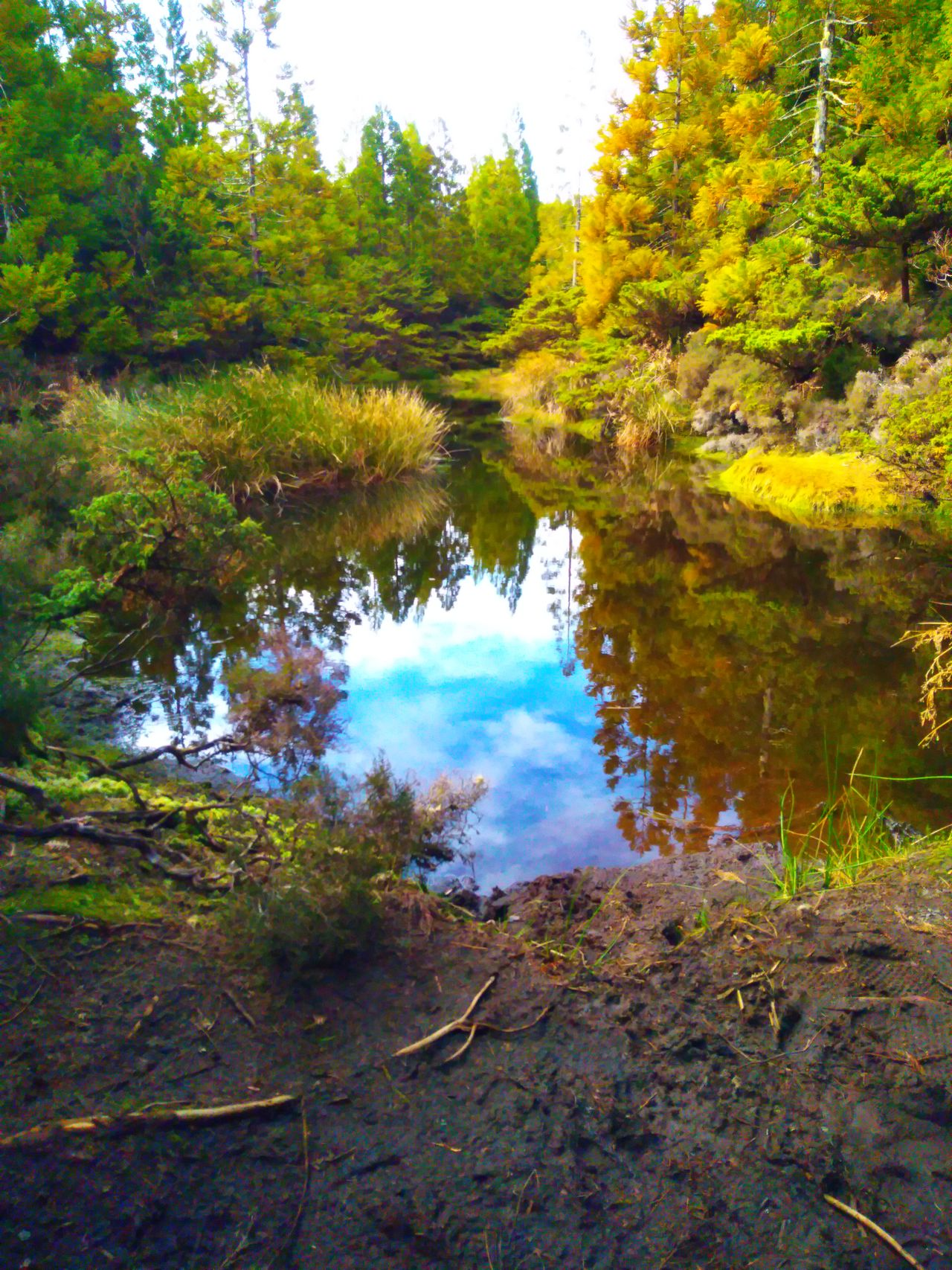 Pond on hiking trail Reflection Tree Nature Water Growth Lake Sky Outdoors No People Reflection Lake Grass Beauty In Nature Day EyeEm Azores Eyeem Market EyeEmNewHere EyeEm Gallery Rural Scene Nature Sunlight Green Color
