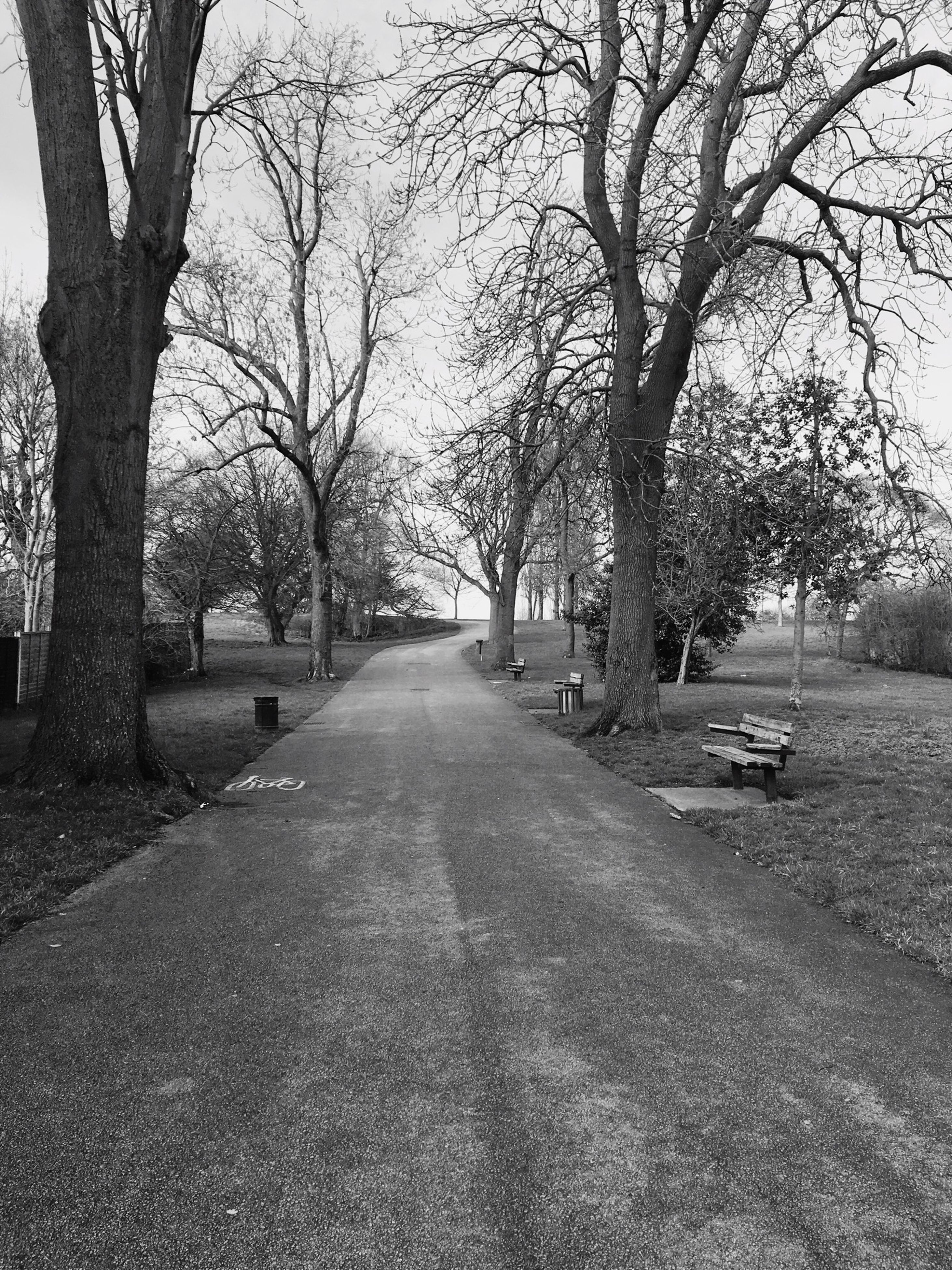 tree, the way forward, diminishing perspective, treelined, bare tree, transportation, vanishing point, road, branch, tranquility, tree trunk, tranquil scene, footpath, nature, park - man made space, empty, street, growth, beauty in nature, day