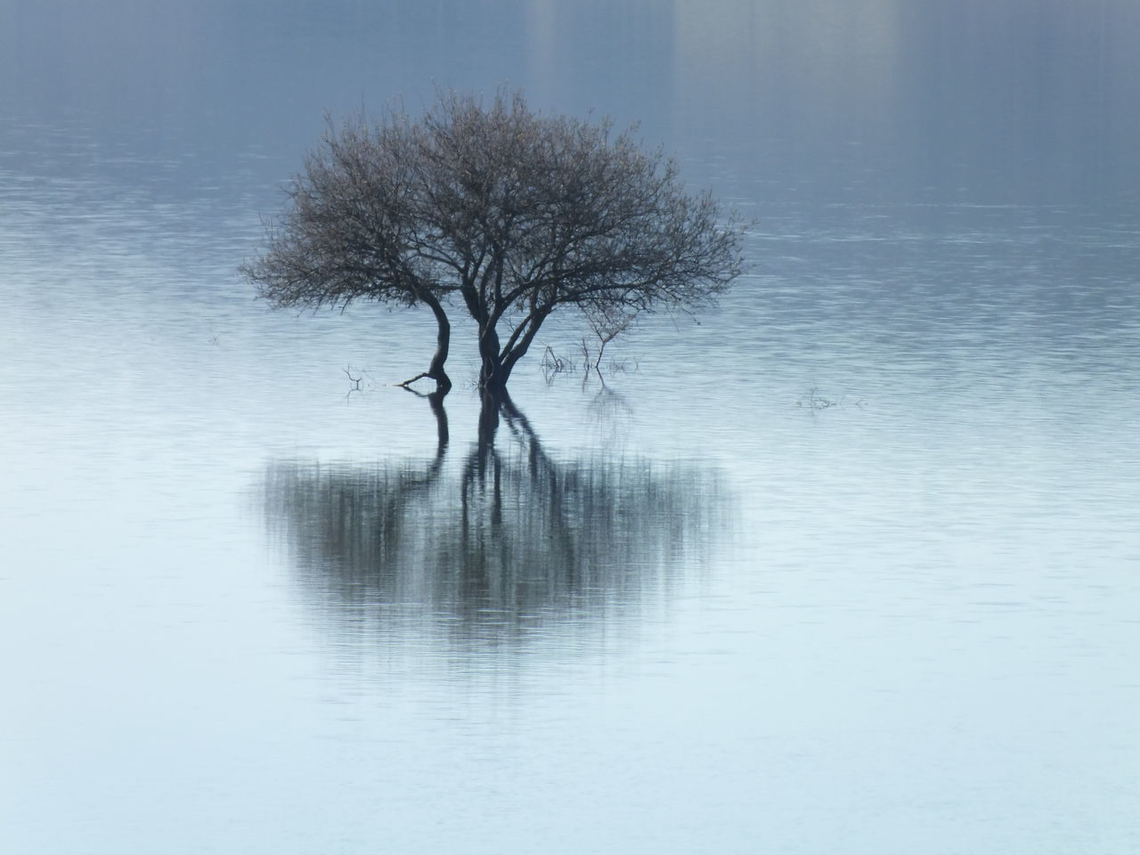 Reflejos en el agua Beauty In Nature Day Nature No People Reflection Reflejos Reflejos En El Agua Tree First Eyeem Photo
