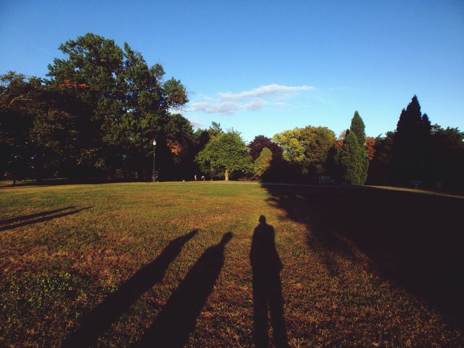 Beautiful stock photos of park, Beauty In Nature, Copy Space, Day, Grass