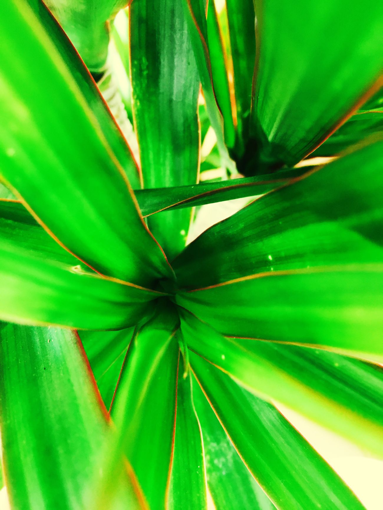 Leaves Green Plant House Plant