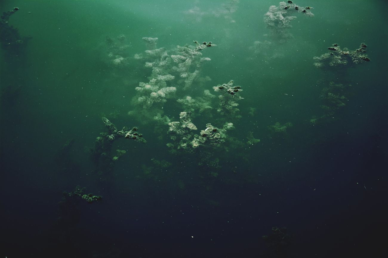 Nature Outdoors Nature Photography Water Underwater No People Beauty In Nature Taking Photos Hello World Eye4photography