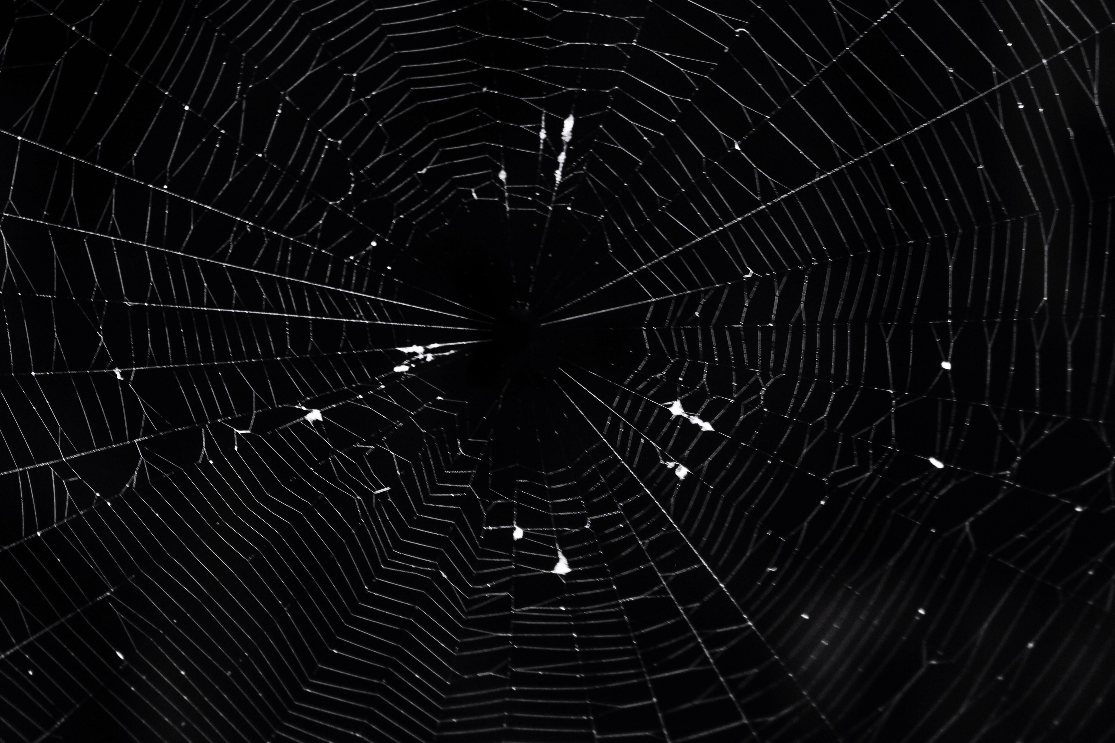 spider web, close-up, fragility, full frame, backgrounds, natural pattern, beauty in nature, nature, repetition, intricacy, outdoors, scenics, web, focus on foreground, zoology, animal markings, bright