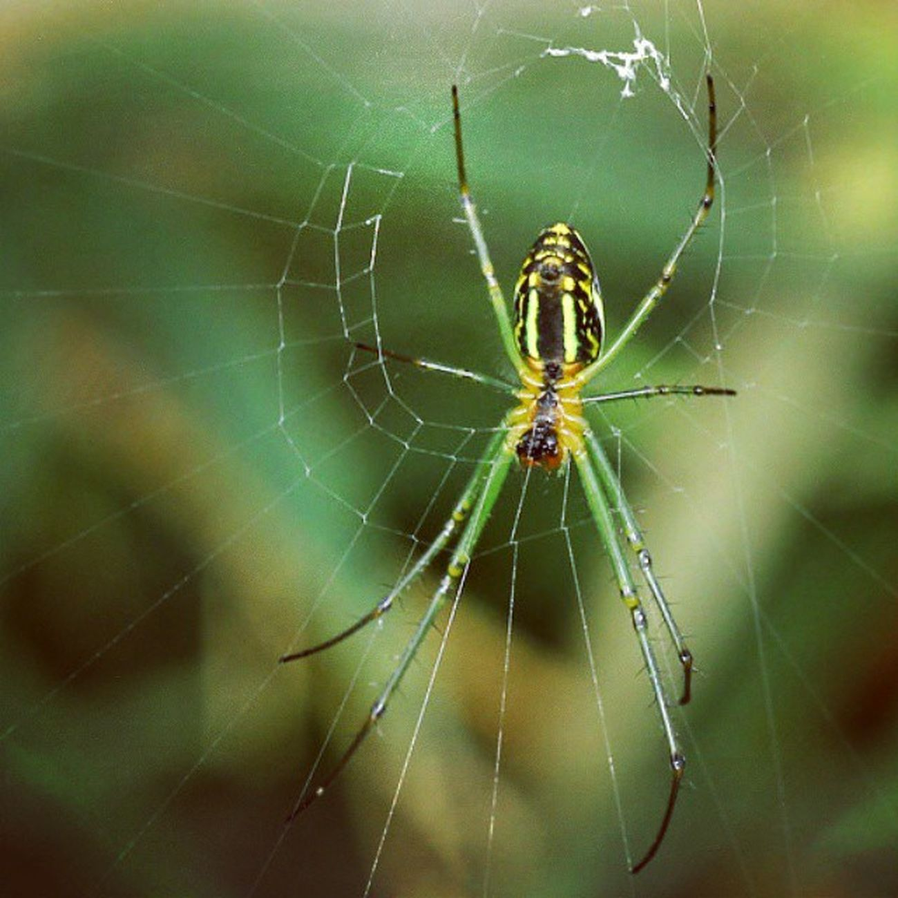 Ig_spiders Ig_spider Spider spiderworld nature green macro closeup top_macro macroworld_tr macroworld_ macro_secrets
