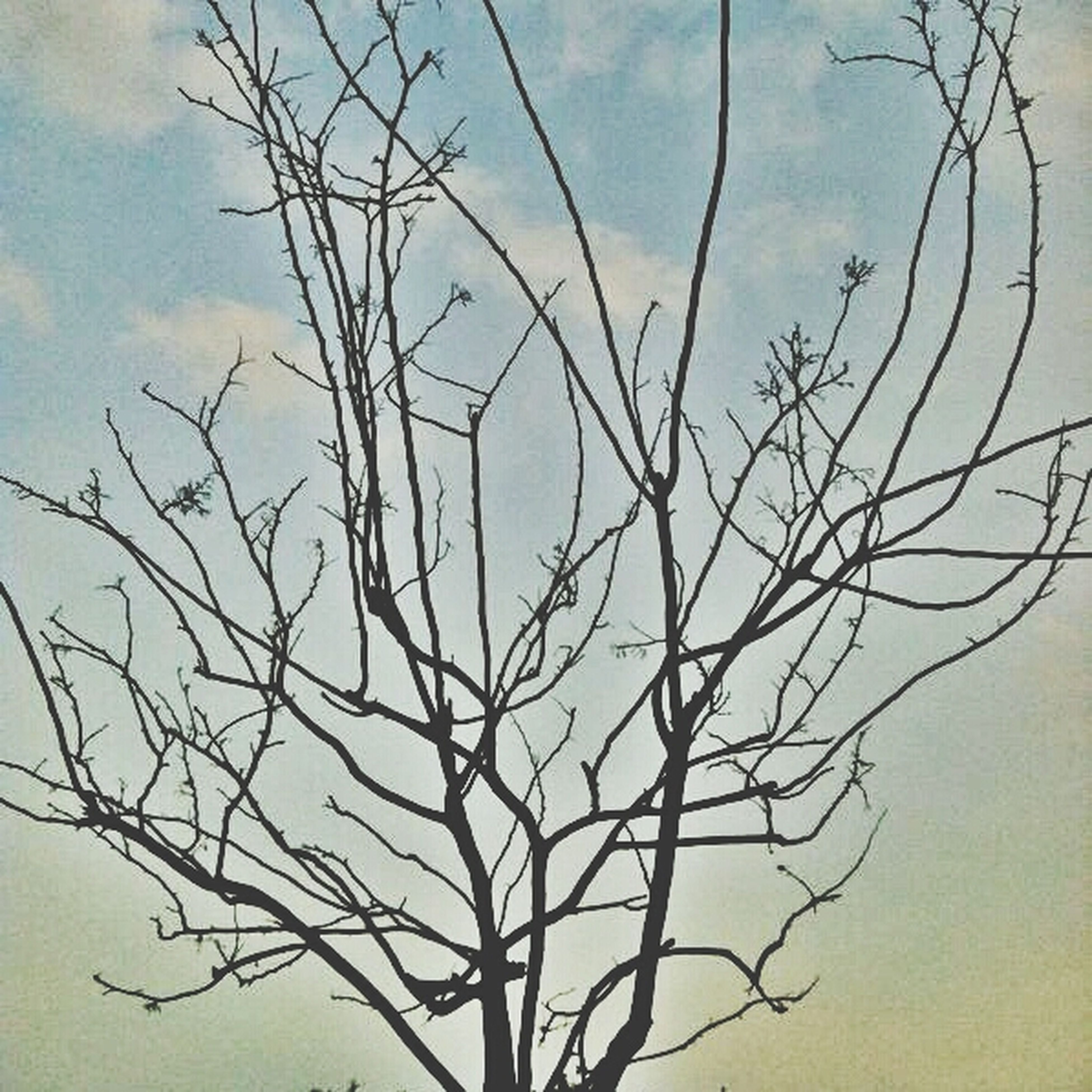 bare tree, branch, sky, tree, tranquility, cloud - sky, low angle view, nature, beauty in nature, tranquil scene, scenics, cloud, silhouette, cloudy, growth, dead plant, outdoors, no people, twig, day