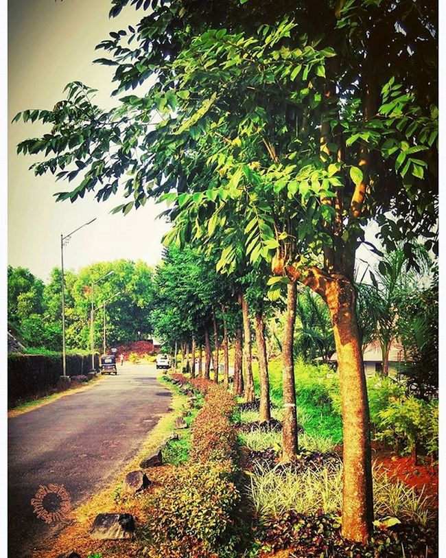 SDMIT . . . . 📷 :Xiaomi Redmi Note Prime Edit:Aviary Sdmit Ujire Engineering College Nature Trees Tree Beautifulmatters Beauty Road Indiacliks Mypixeldiaries Evening Eve Green Onlyphone Phoneonly Mobilephotography Topmobilegraphy Mobograph Xiaomi Redmi Xiaomiphotography Mi
