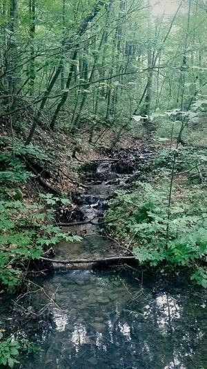 Walking On A Hike Enjoying The Sights Pennsylvania Beauty Chasing Waterfalls