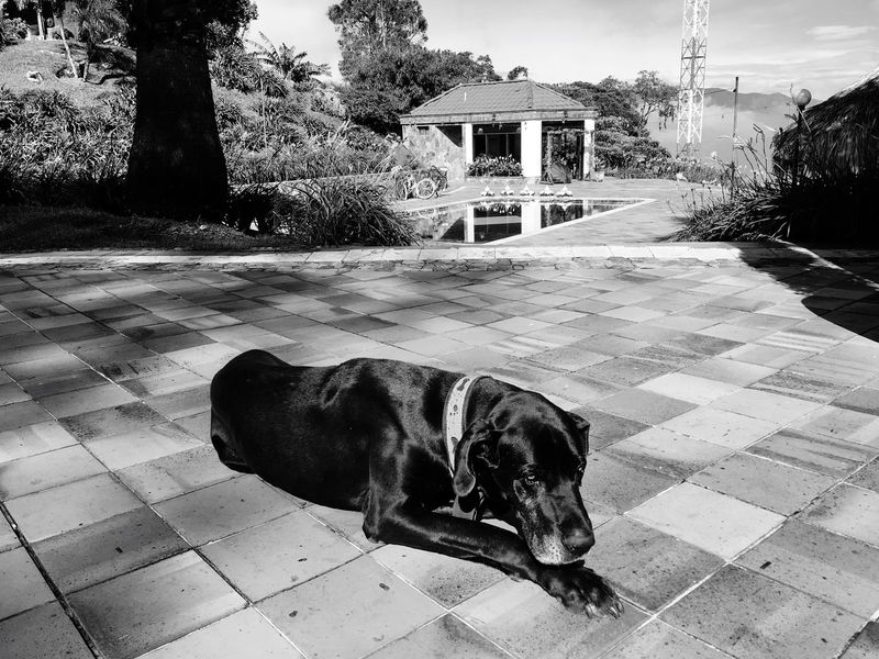 Dog Animals Mascot Pet Animal Animal Love Dog Love Dogs Of EyeEm Dog Sleeping  Black Dog